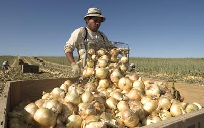 sweet-onion2